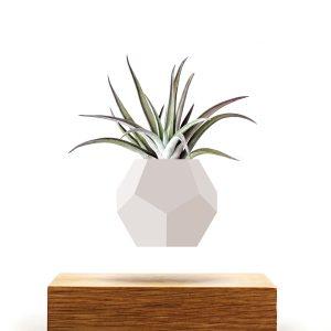 LYFE Planter Zwevende Plant Hout Design Hoesie